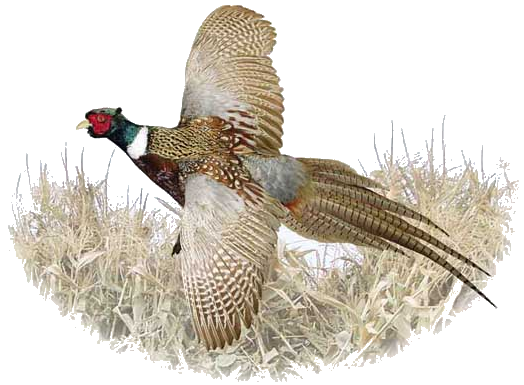 The history and growth of the nonprofit conservation organization pheasants forever